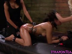 Wicked mistress strapon