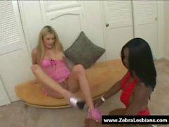 Zebra Girls - Ebony lesbian babes enjoy deep strap-on fuck 04
