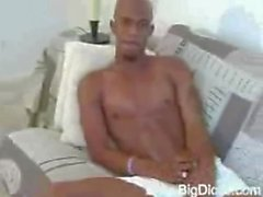 Splendida Black Cock ictus