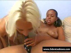 Zebra Lesbians - Sexy ebony lesbians fuck with strap-on toy 23