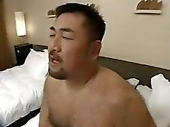 asiatico Bear