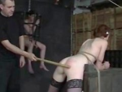 Insex suspension caning