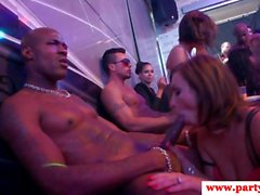 Amateur euro babes railed at sex party
