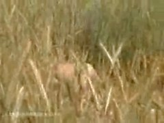 Amateur fuck spycamed in the wheat