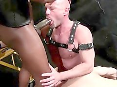 Popular Leather Videos